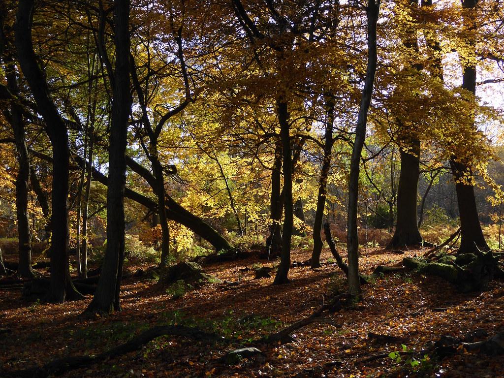 英国徒步活动 | Oxted Circular Walk徒步活动计划